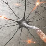 Neural Pathways lead to changed habits